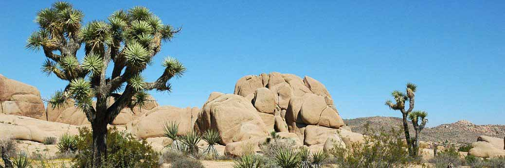 Joshua Tree: Brandstiftung in der Oasis of Mara